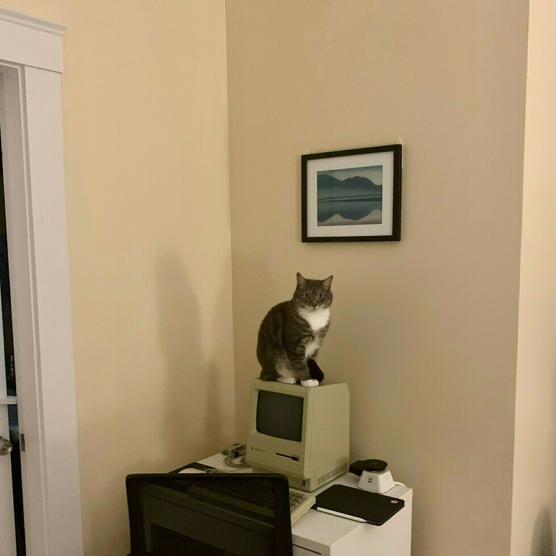 cat sitting on top of mac plus